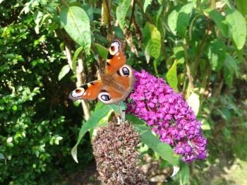 Butterfly in London